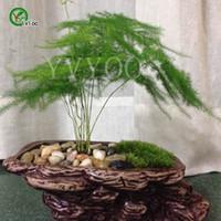 ingrosso bambù coperto-30 semi di bambù in vaso, piante da interno fiori nuovo arrivo giardino di casa fai da te fiore pianta D029