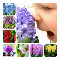Wholesale beautiful bulbs - 100 Pcs Bag Colorful Hyacinth Seeds Bonsai Beautiful Flower Seeds (Not Hyacinth Bulb) Hydroponic Flower So Fragrant Forever Missing Outdoor