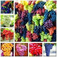 ingrosso organic fruit-50 pz / borsa Molto raro finger uva semi Heirloom semi di frutta biologica, uva di crescita naturale, piante in vaso bonsai per giardino di casa