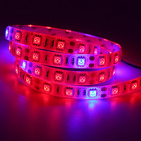 Wholesale leds grow light for sale - Group buy Full Spectrum LED Strip Light M LED Phyto Lamps LEDs Chip LED Grow Lights For Greenhouse Hydroponic plant flower