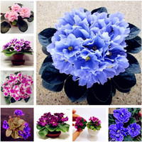 Wholesale Violets Flowers - Big Promotion! 100 Pcs African Violet Flower Seeds Rare Garden Bonsai Perennial Herb Flower Seed Variety Complete Mixed 24 Color