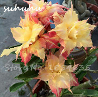 Unique Yellow Desert Rose Seeds Ornamental Plants 10 Pcs Rare Beautiful Flowers Seeds Balcony Potted Adenium Obesum Seeds Free Shipping