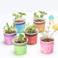 Wholesale 1pcs Mini Creative Potted Plants Lavender Sunflower and Vegetable Plant Seeds Miniature Home Garden Plant Potted Baby Gift