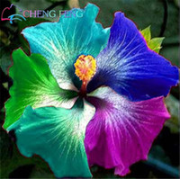 Wholesale Giant Outdoor - 100 pcs bag giant hibiscus flower seeds giant hibiscus seed rare bonsai flower seeds outdoor plant seeds for home garden easy to grow