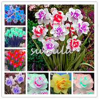 Wholesale Plants Seeds Bulbs - 100 pcs bag flower daffodil,daffodil seeds(not daffodil bulbs)bonsai flower seeds aquatic plants double petals Narcissus garden plants