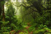 vinilo personalizado al por mayor-7x5FT Fairy Tropical Forest Mud Tree Path Tunnel Custom Photo Studio Telón de fondo Fondo Vinilo 220cm x 150cm