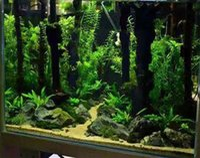 Emours Reptile D/¨/¦cor Natural Forest Branch Terrarium Wood Aquarium Ornament 4 Pack