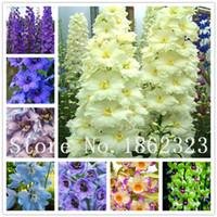 semillas de variedad al por mayor-Envío gratis 100 piezas / embalaje Semillas de Dendrobium Variedad de semillas de flores en macetas Complete la tasa de florecimiento 95% Colores mezclados Sementes