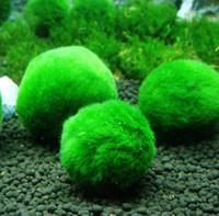 plantas aquáticas tanque de peixes venda por atacado-Algas verdes musgo bolas aquário paisagismo decoração plantas de sementes de grama de água real viver algas bola preguiçoso peixe camarão tanque ornamento