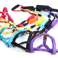 Wholesale black xl dog collar for sale - Group buy Traction rope pet dog strap dog collar small and large color S XL