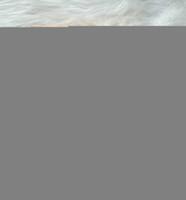 cartera de cuero organizador monedero hombre al por mayor-Organizador de bolsillo de excelente calidad NM damier rojo hombres y mujeres Carteras de pasaporte de cuero real tarjetero N63144 monedero id billetera bolsos plegables