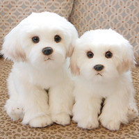 Wholesale dog pet photos for sale - Group buy 28cm Cute White Bichon Frise Stuffed Dog Plush Toy Simulation Pet Fluffy Baby Kids Doll Birthday Gift for Children Photo Prop