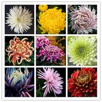 renk tohumunu karıştır toptan satış-100 Adet Krizantem Tohumları Nadir Yıllık Çiçek Tohumları Kapalı Bonsai Bitkiler Krizantem bitki Ev Bahçe Için karışık renk