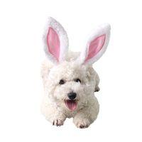 köpek kostüm çocuğu toptan satış-Köpek Pet Köpekler için Pet Kulaklar Yavru Parti Paskalya Cadılar Bayramı Kostüm Kıyafetleri Köpek Şapka Kafa Boyun Kulak Isıtıcı