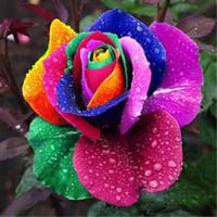 colorful rose seeds toptan satış-Sıcak Romantik Renkli Düğün Çiçekleri Gökkuşağı Gül Tohumları Paket Başına 100 Tohumlar Gökkuşağı Renk Bahçe Bitkiler Düğün Malzemeleri