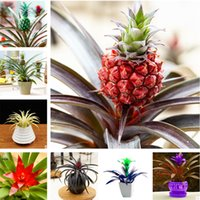 500 PCS Seeds Bonsai Dragon Pitaya Tree Fruit Plants Tropical Garden Rare 2019 N