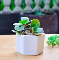 ingrosso vaso di bonsai in ceramica-vasi di bonsai in ceramica all'ingrosso mini vasi di porcellana bianca fornitori per la semina di piante da interno succulente fioriere vivaio