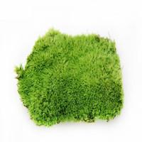 ingrosso green moss-Muschio artificiale Merci di muschio di alta qualità Moss vivente Pianta artificiale Pianta vivente Pianta della natura reale Erba verde C19041302