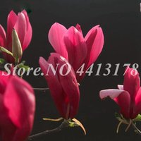 Magnolia Seeds Canada Best Selling Magnolia Seeds From Top