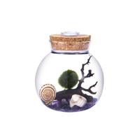 Wholesale cork kit for sale - Group buy 4 quot LED Aquarium Kit Round Glass Jar with Cork Aquarium Gravels Living Moss Ball and Shells