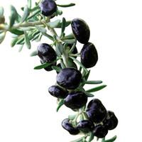 pansies tohumları toptan satış-Vahşi siyah Wolfberry fideler siyah Wolfberry fidanları seabuckthorn meyve fidanları alan dikim diğer saksı dikim Wolfberry