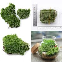 ingrosso green moss-Decorazione del partito di casa Piante artificiali miniatura dell'erba dell'erba del muschio dell'erba verde artificiale 2019