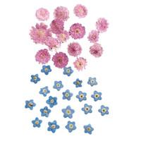 ingrosso carte di fiori secchi-20Pcs premuto foglia secca del fiore per cassa dei monili del telefono Biglietto di auguri fai da te Decor