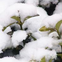 anlık kar toptan satış-Yapay kar taneleri Bahçe Noel Düğün Yapay For Snow Sahte Sihirli Anında Kar Festivali Parti Süslemeleri