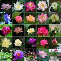 lotus bonsai toptan satış-10 Adet / torba Lotus Çiçek Lotus Bonsai Su Bitkileri Kase Lotus Su Zambak Bonsai Çok Yıllık Nymphaea Bitki Ev Bahçe Için