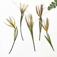 pro blumen großhandel-Natur-Farben-Lilie auf Stamm-zutreffender Blume getrocknete dekorative Blume für DIY Edelstein-Bookmark Bithday Geschenke 100 PC pro Los geben Versand frei