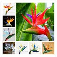 ingrosso decorazione del giardino degli uccelli-50 Pz / lotto Strelitzia Reginae Aiton Piante Bonsai Cielo Raro Uccello Fiore Piantare in Vaso per la Decorazione del Giardino di Casa