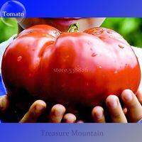 semillas de hortalizas gmo al por mayor-30pcs escalada bonsai semillas de tomate Las plantas de tomate de tomate Semillas de hortalizas comestibles no-GMO olla de comida plantación jardín de su casa