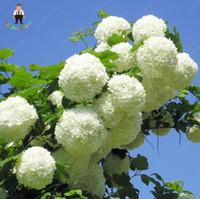 ortanca bonsai bitkileri toptan satış-50 adet / torba Ortanca Çiçek Tohumları karışık renk Bonsai Kale Viburnum Ortanca Macrophylla Bonsai Bitki Tohumları ev bahçe için