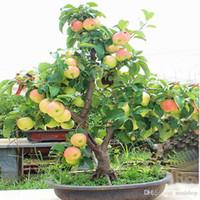 ingrosso piante di melo-Semi di melo Bonsai Nano Melo Semi di frutta MINI per giardino domestico Piantare Bonsai di nano Melo 100 pezzi