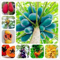 ingrosso semi di frutta nana-30 ps / borsa nana hovey semi di papaia bonsai semi di frutta biologici semi di alberi rari deliziosi frutti di piante di papaia in vaso per giardino di casa