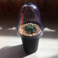 ingrosso bonsai fiore vaso-100PCS-PACK Plastica Coperchio trasparente per vasi da fiori Coperchio Tappo per vasi per giardini domestici Strumenti Vientiane Bonsai