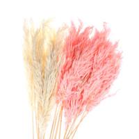 Wholesale new dried flowers resale online - 1Pc Bouquet Dried Plants Pampas Grass Natural Phragmites Communis Wedding Flower Bunch Raw