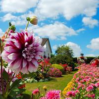 ingrosso piante di semi di giardino-Semi di fiori coloritamente rosa rosso * 100 semi per confezione * Balcone Fiori in vaso Piante da giardino In vendita
