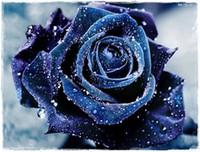 belles fleurs bleues achat en gros de-Expédition rapide Rare Beautiful Navy Blue Rose Graines de fleurs * 100 pièces graines par paquet * Nouvelle arrivée deux couleurs charmantes plantes de jardin