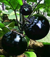 semillas de solanum al por mayor-Suntoday china NEGRO REDONDO BERENJENA Solanum Melongena Vegetable Seeds Asian Garden planta híbrida de semillas no-GMO orgánicos frescos