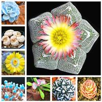 200 pcs  bag Rare Succulent Planter Bonsai plant seeds Mix Lithops Bonsai Pseudotruncatella Living Stone Bonsai Garden Succulents-Plants Pot