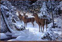 lona branca para pintura a óleo venda por atacado-Casa Art Decor Animal Cervos-de-cauda-branca Oil Painting Picture impresso em tela para a sala de estar adorno Art a4