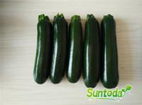 ingrosso semi di verdure cinesi-Suntoday cinese ESTATE COCOZELLE SQUASH VERDE Zucchine Semi di ortaggi Giardino asiatico Pianta ibrida Non-OGM Semi freschi biologici