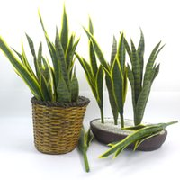 Wholesale green orchids wedding for sale - Group buy Simulation Plant Tiger Skin High Quality Orchid Garden Home Decoration Accessories Yellow Green Plant Bonsai Decoration