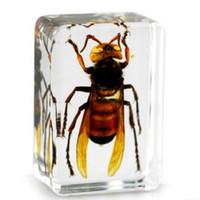 brinquedos de descoberta venda por atacado-Tigre Real Wasp Specimen Resina Acrílica Embutida Natureza Insetos Bloco Transparente Mouse Paperweight Crianças Biologia ScienceDescoberta BrinquedosPresentes