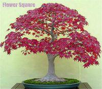 jardim japonês bonsai venda por atacado-50 pçs / saco sementes de Bordo japonês plantas Bonsais Varanda Rara Plantio Mini bonsai árvore plantas Maple sementes de Decoração Para Casa Jardim