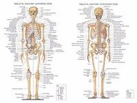 sistema de tela al por mayor-Carta anatómica del cuerpo humano Sistema muscular Campus Conocimiento Biología Aula Pintura de la pared Tela poster32x24