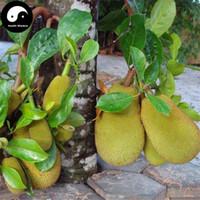 büyük çiçek tohumları toptan satış-Yeni Taze Tohumlar Tropikal Nadir Tohum Meyve Ağaçları Jackfruit Tohumları Pot Büyük Yeni Bahçe Bitkileri Çiçekli Bitkiler 10 adet Ücretsiz Kargo