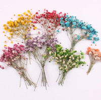 Wholesale blue flowers case resale online - 120pcs Pressed Dried Flower Gypsophila paniculata Filler For Epoxy Resin Jewelry Making Postcard Frame Phone Case Craft DIY