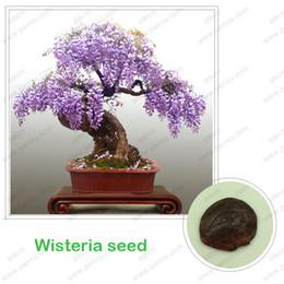 Wisteria tohumları, bonsai Wisteria sinensis ağacı 100% gerçek tohum ayni çekim, 10 adet / torba cheap wisteria seeds nereden fidan tohumları tedarikçiler